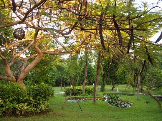 Mimpi Resort Menjangan: Lovely grounds
