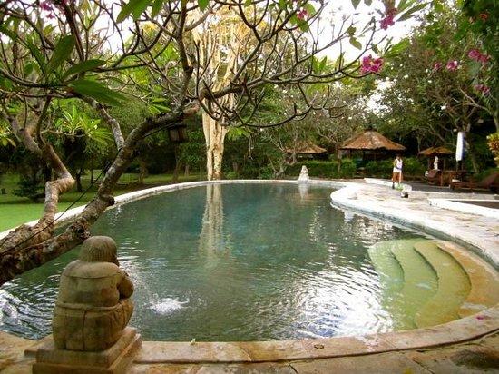 Mimpi Resort Menjangan: take an early morning swim!