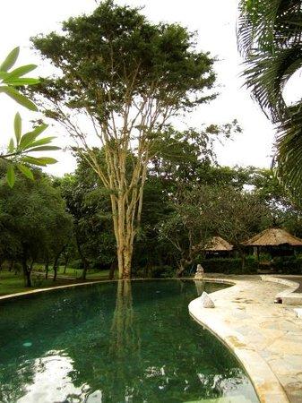 Mimpi Resort Menjangan: lovely warm pool!