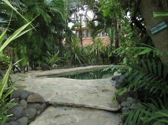 Mimpi Resort Menjangan: natural spring