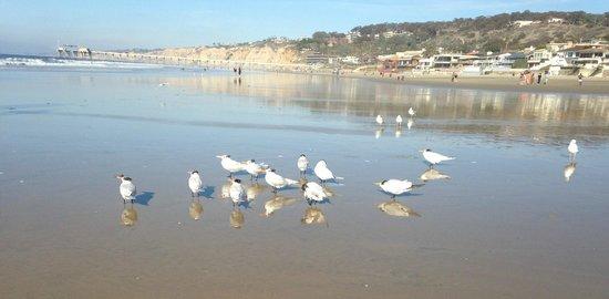 La Jolla Shores Hotel : Walk on the beach