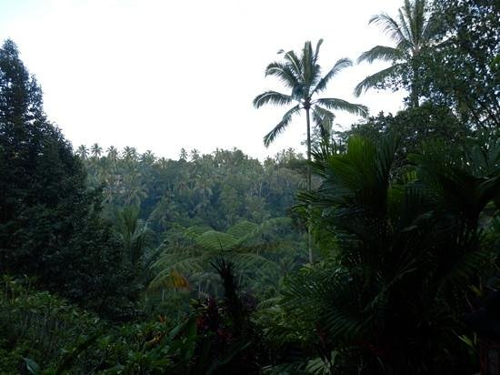 Villa Sarna Ubud : the view from our room