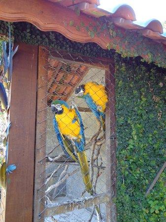 Pousada Rio Dos Cristais : Araras