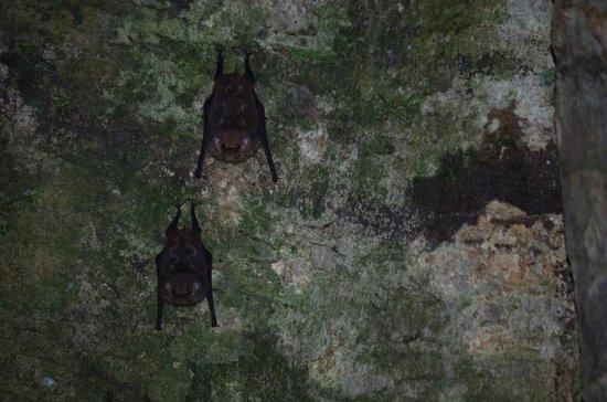 Tapiche Reserve: Bats