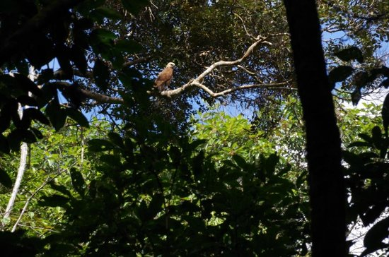 Tapiche Reserve: Fishing Hawk