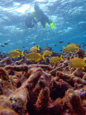 Aruba Bob Snorkeling: Bob takes the best photos!
