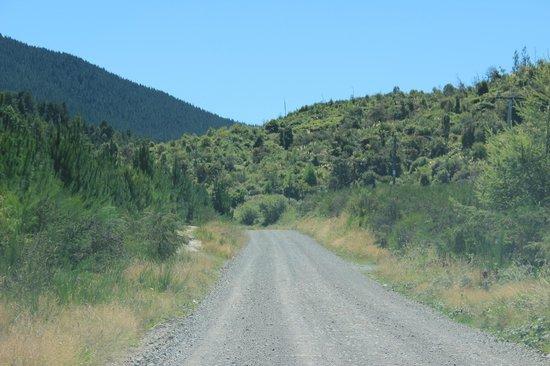 Kerosene Creek : Old Waiotapu Road