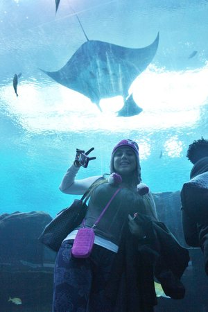 Georgia Aquarium: manta raya