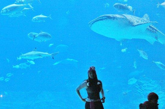 Georgia Aquarium: hermosisimo verlos de cerca