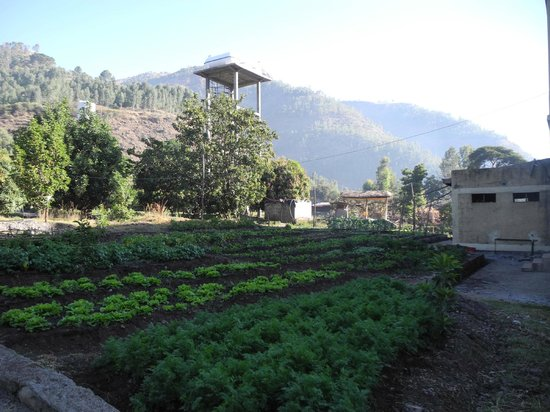 Lal Hotel Woldiya: Vegetable garden in the grounds