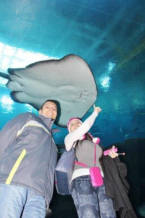Georgia Aquarium: que gigante manta raya