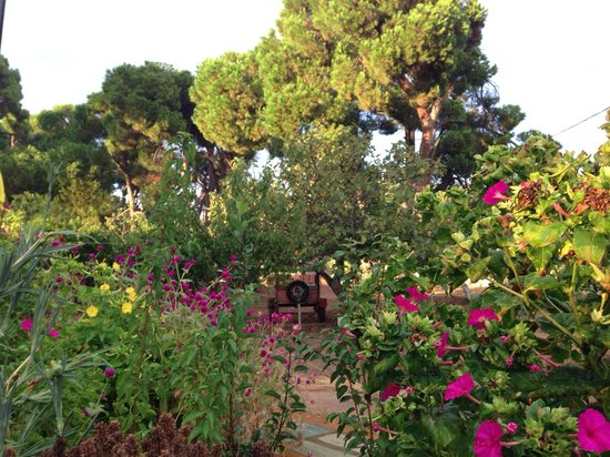 Sunset Hotel & Apartments: Sunsets glorious garden!