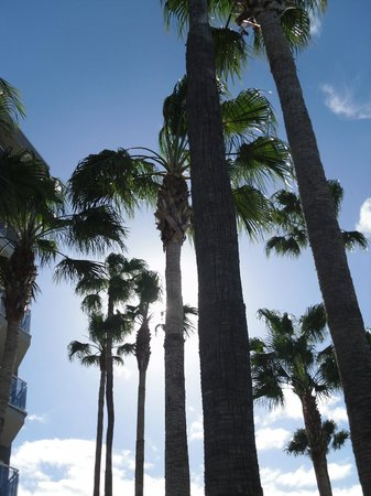 HOVIMA Costa Adeje: another view from pool