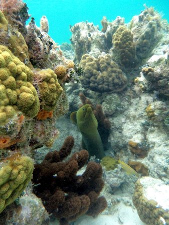 "Sin Duda Villas: Moray Eel living in ""Margo's Reef"", only 100 feet from the beach"