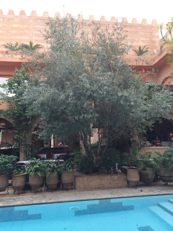 La Maison Arabe: Tree by the pool
