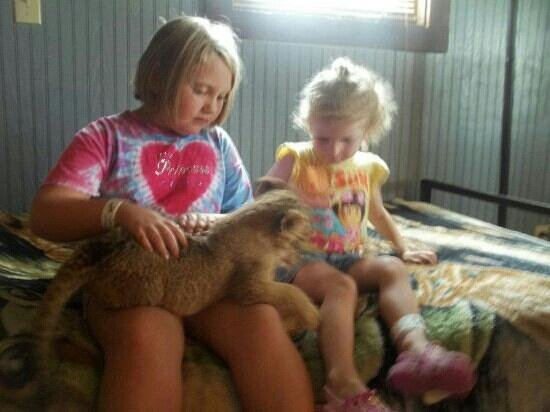 Stapp Circle S Ranch: interacting with Lion Cub