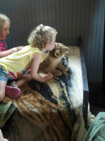 Stapp Circle S Ranch: Kissing a lion!