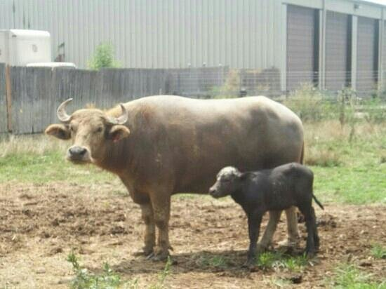 Stapp Circle S Ranch: Baby