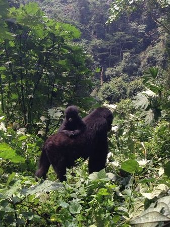 African Pearl Safaris: Bwindi Impenetrable Forest!