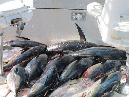 Guerita Sportfishing: Tuna