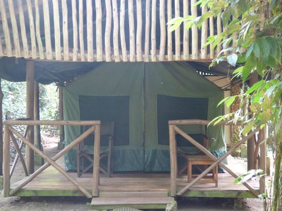 Kibale Forest Camp : Tent