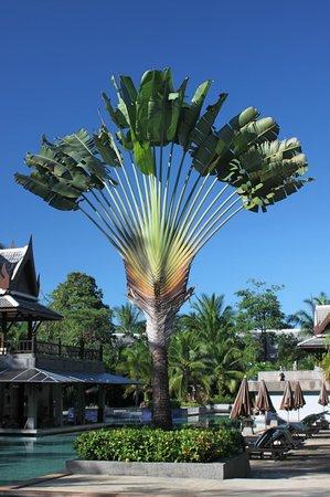 Mukdara Beach Villa and Spa Resort: part of the tropical garden