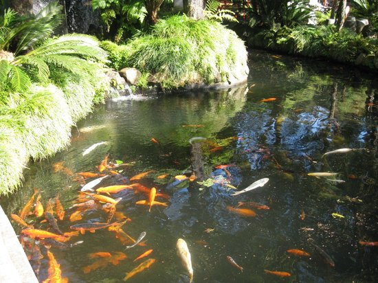Monte Palace Madeira : A lovely day in the Gardens January 2014