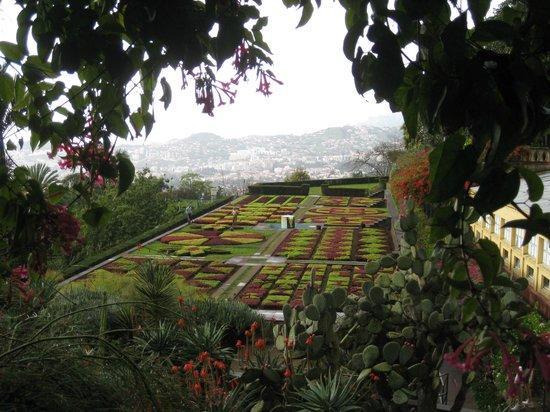 Madeira Botanical Garden : Botanical gardens January 2014