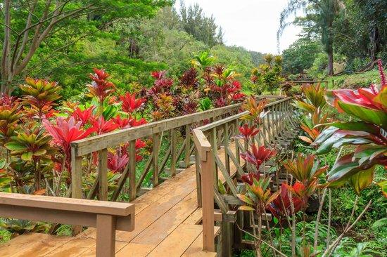 Wai Koa Loop: Bridge into garden area
