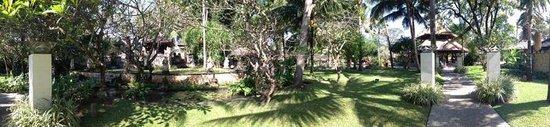 Segara Village Hotel : A hotel's tree