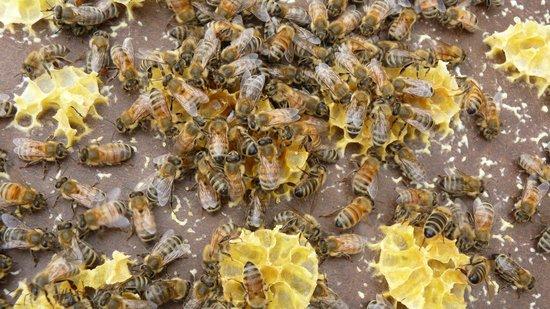 Bee Haven @ Paihia