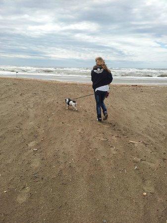 Camping Mediterranee-Plage: auch Hunde dürfen Mit Gassigang mit Hund am Strand :D