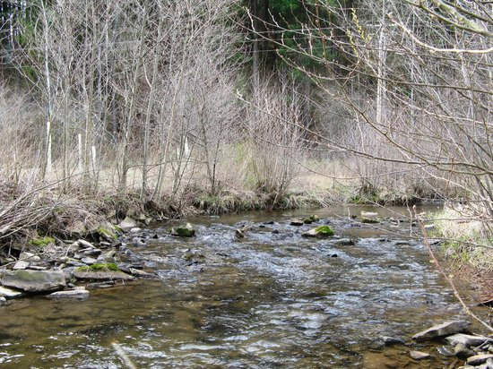 Sweden Valley Hotel & Cabins: Trout Stream in Potter County