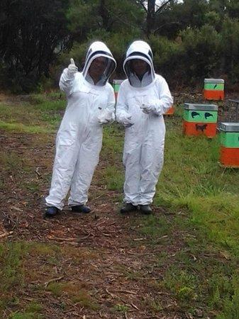 Bee Haven Paihia: visitors