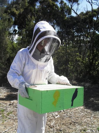 Bee Haven Paihia: adding a box for more honey