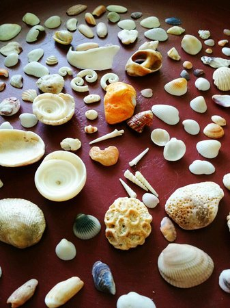 Natai Beach Resort & Spa, Phang-nga : shells I found on the beach
