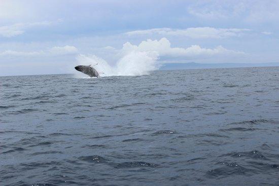 Hawaii Ocean Rafting: double breech spectacle!