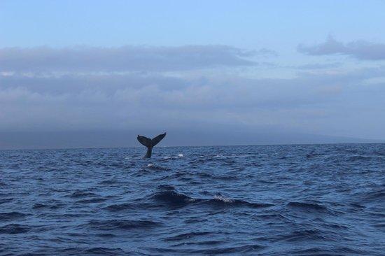 Hawaii Ocean Rafting: all day long