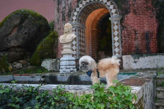 Penha Longa Resort: Our Simba
