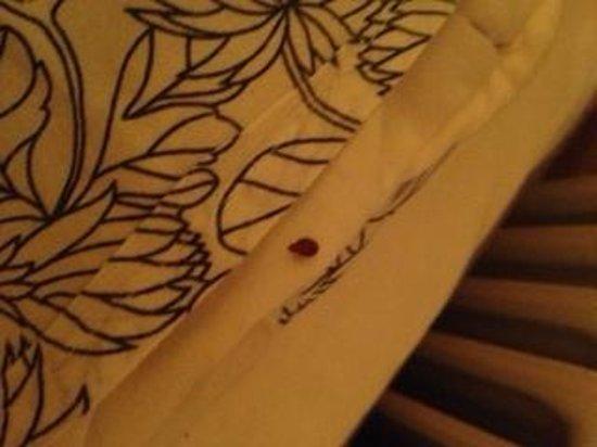 Hotel Gamla Stan: bug in the duvet