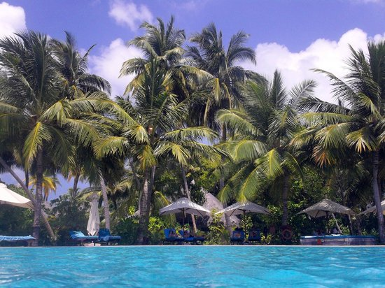 Veligandu Island Resort & Spa: Pool view