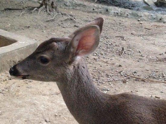 Grand Palladium Vallarta Resort & Spa : Deer