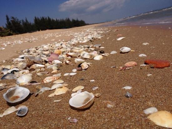 Sandhills Beach Resort & Spa: утром можно увидеть множество ракушек на берегу