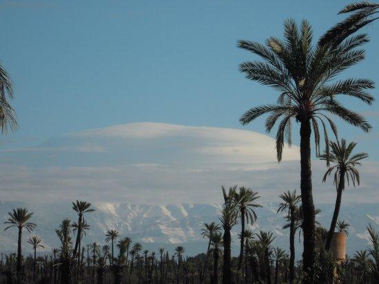 Club Med Marrakech La Palmeraie: En ballade en vtt dans la palmeraie