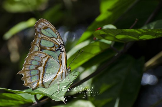 The Butterfly Farm (La Ferme des Papillons): at the Butterfly Farm