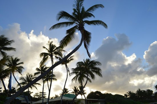 The Palms at Pelican Cove : grounds