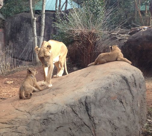 Zoo Atlanta: Little furballs!