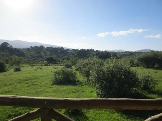 Ngorongoro Rhino Lodge: At night we saw two large male buffalo from here.