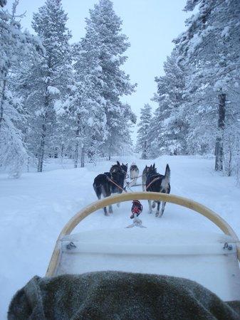Lapland Hotel Hetta: Safari huskies