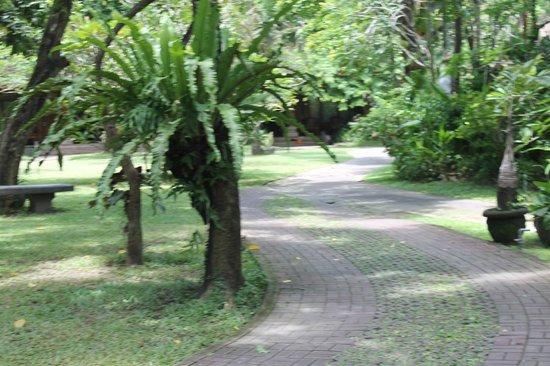 Matahari Bungalow Bar & Restaurant : Garden